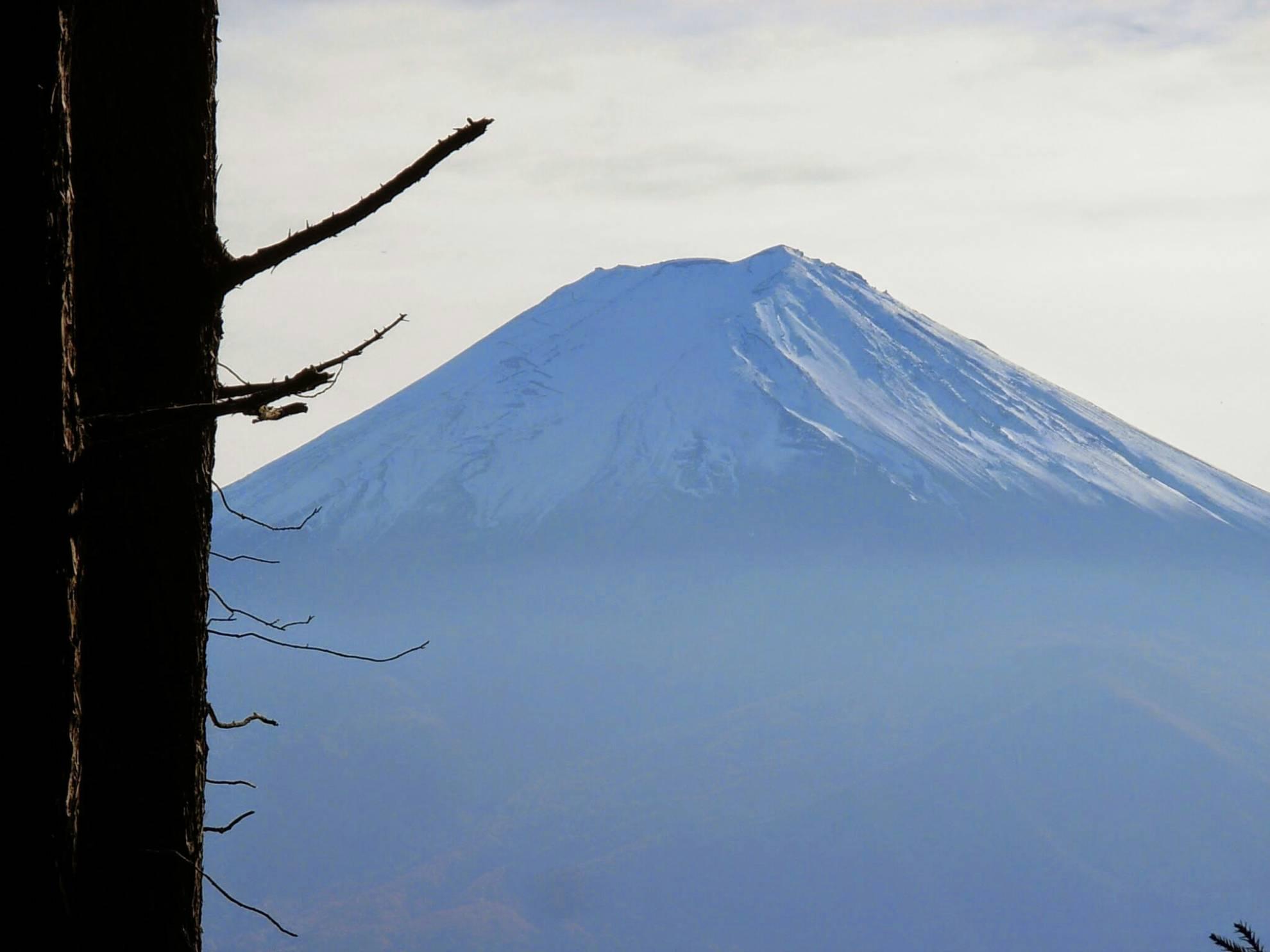 海老名植木屋江隆園 謹賀新年 富士山